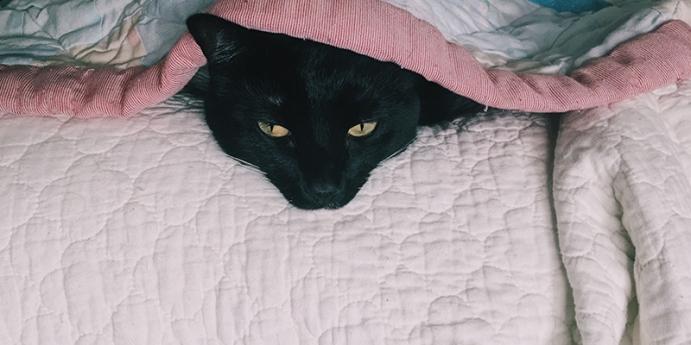 Kedi kusması tedavisi nedir?