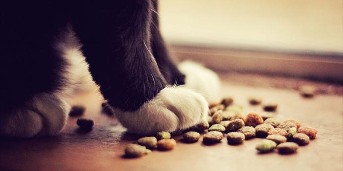 3. Sardalyalı ev yapımı kedi maması tarifi