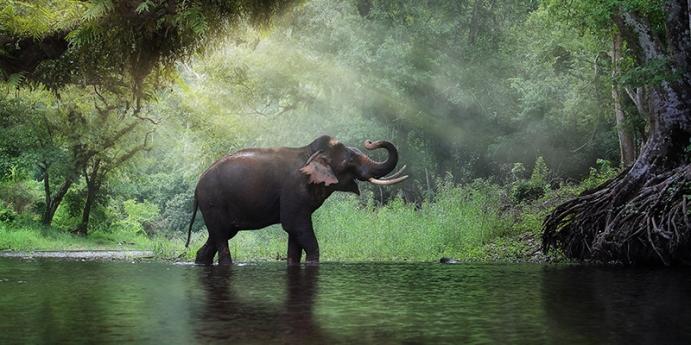 Fillerin zekası