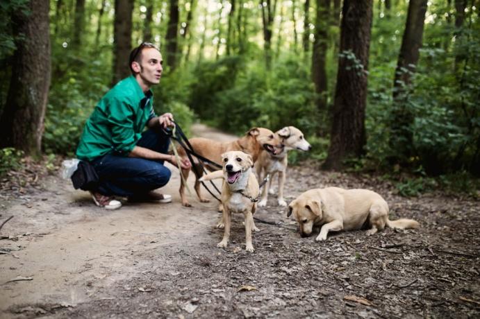 Köpek gezdirirken dikkat edilmesi gereken noktalar nelerdir?