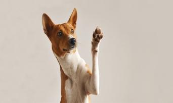 Muhteşem Hayvanlar Serisi 3: Köpekler