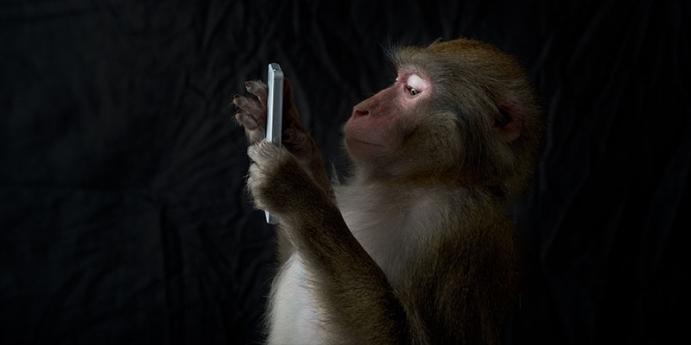 2. Maymun