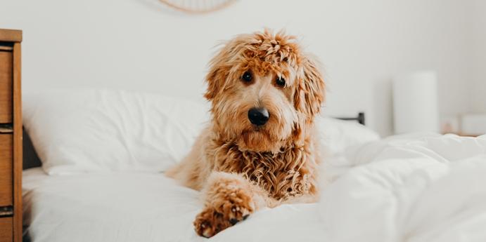 Köpeklerde iştahsızlık ve halsizlik nedenleri nedir?