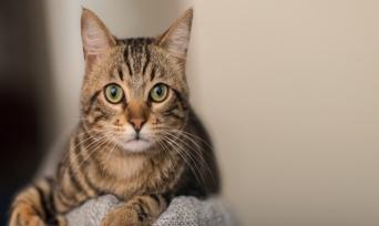 Bunları Bilmeden Kedi Sahiplenmeyin