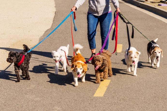 Köpek gezdirme işi ortalama ne kadar para kazandırır?