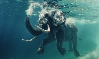 Muhteşem Hayvanlar Serisi 4: Filler