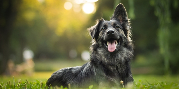 Köpekler ve davranışları