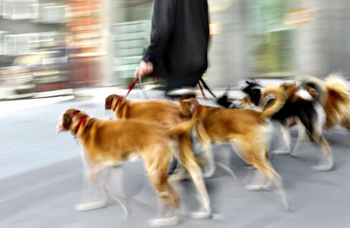 Kimler köpek gezdirme işini tercih edebilir?