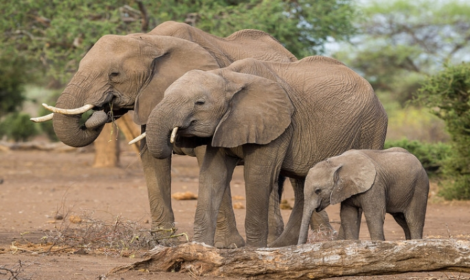Fillerin Özellikleri ve Hakkında 14 İlginç Gerçek