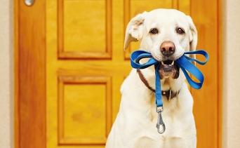 Köpek Gezdirme Nasıl Yapılmalı?