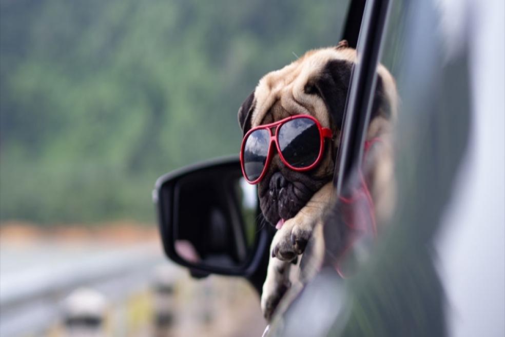 Köpeğiniz İle Araba Yolculuğunda Mutlaka Bilmeniz Gerekenler