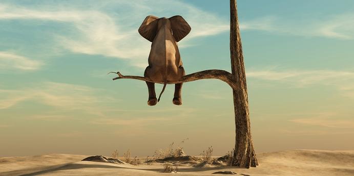 Fillerin fiziksel özellikleri nelerdir?