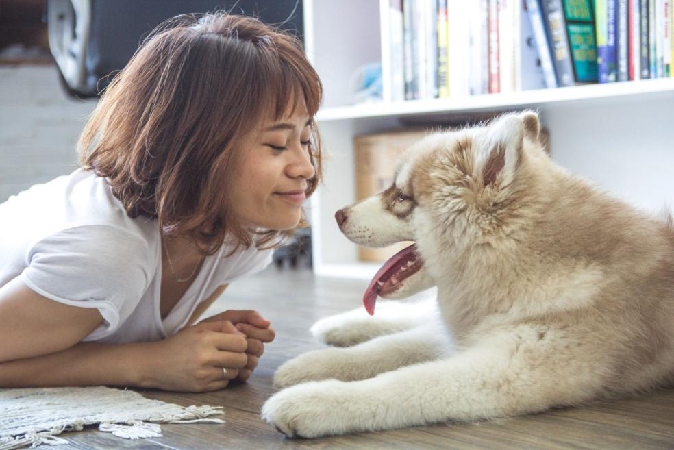 Bir Köpek Sahiplenirken Nelere Dikkat Etmeliyiz?