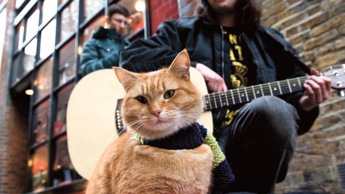 Bir gece evine dönerken kaldığı apartman dairesinde sarman bir kediye rastlar ve Bob adını vereceği sokak kedisi hayatına muazzam bir dokunuşta bulunur