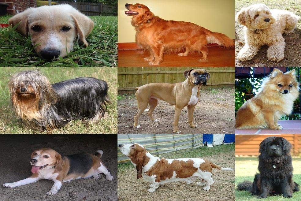 Apartman Dairesi İçin Hangi Cins Köpekler Uygundur?