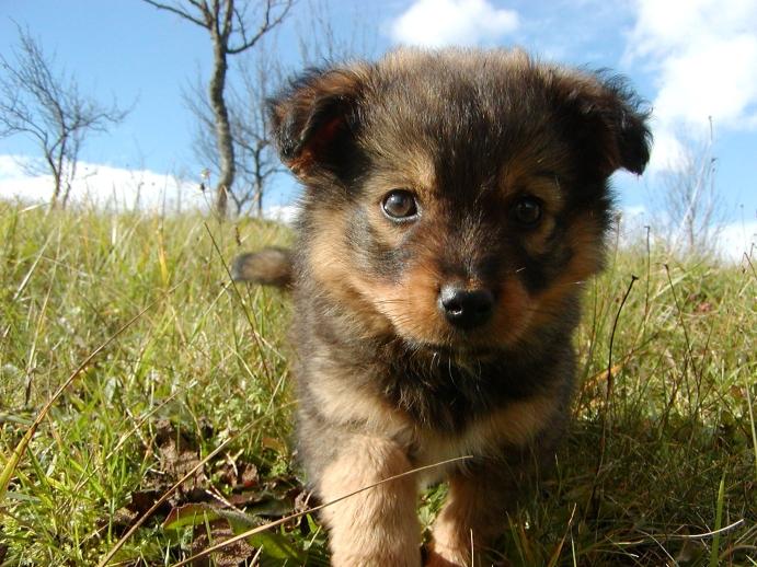 Yavru köpekler için eğitimler