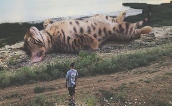 Kediler Ya Büyük Olsaydı