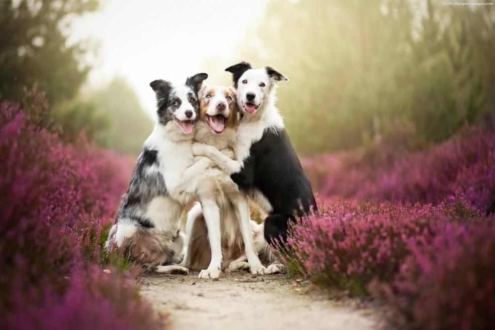 Köpeğimizin Sosyalleşmesini Nasıl Sağlarız?