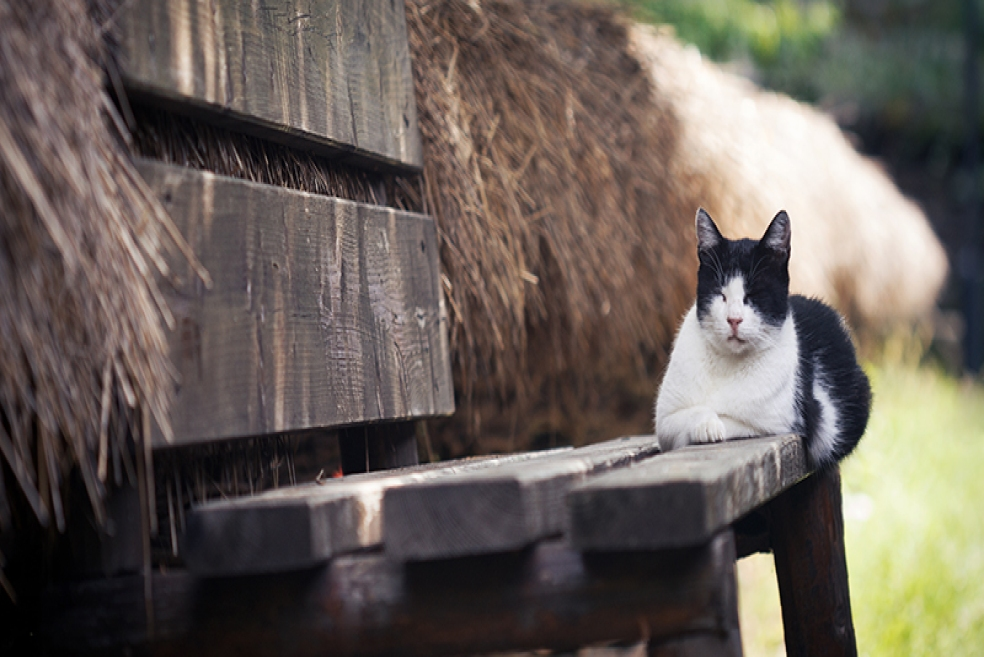 Kedi Sahiplenme Nedir? Nasıl Yapılır?