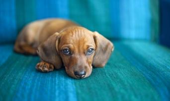 Köpeklerin Hoşlanmadığı 4 Davranış