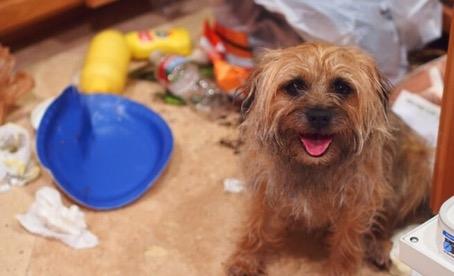 2) Köpeğinizin medeni bir insan gibi davranmasını beklemek