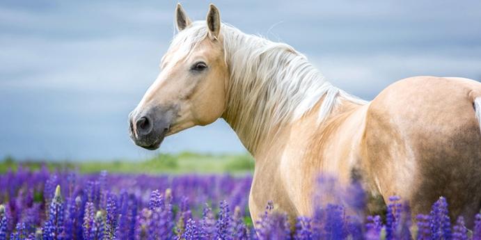Atlar'ın davranışları
