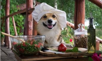 Petin İçin Pişir Günü'ne Özel Tarifler