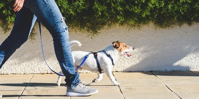 İnsanlar için köpek gezdirme