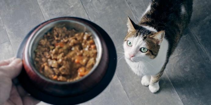 2. Ton balıklı ve ciğerli ev yapımı kedi maması tarifi
