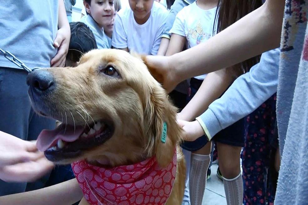 Her Okula Bir Sokak Köpeği