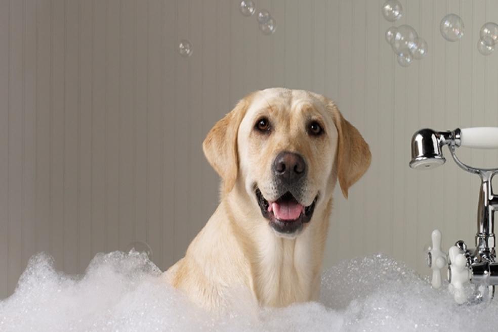 Köpeklerin Banyosu Nasıl ve Ne Sıklıkla Yaptırılmalıdır?