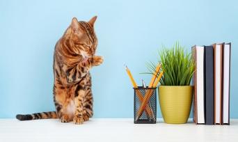 Kedi Tırmalaması Nedir? Nasıl Önlenir?