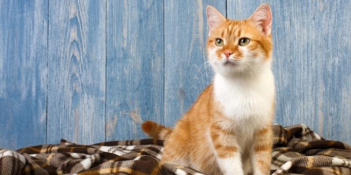 Kedilerin kusmasının nedenleri nelerdir?