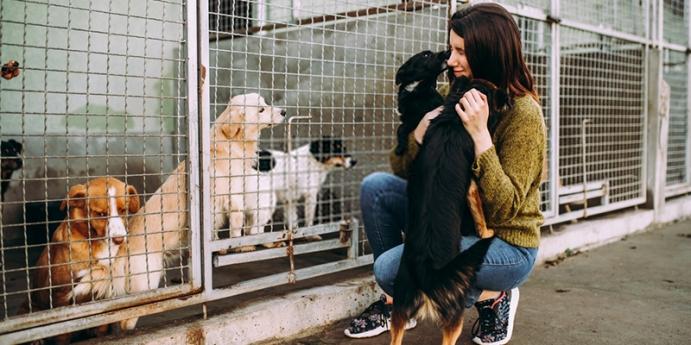 Hayvan barınaklarından dost sahiplenmek