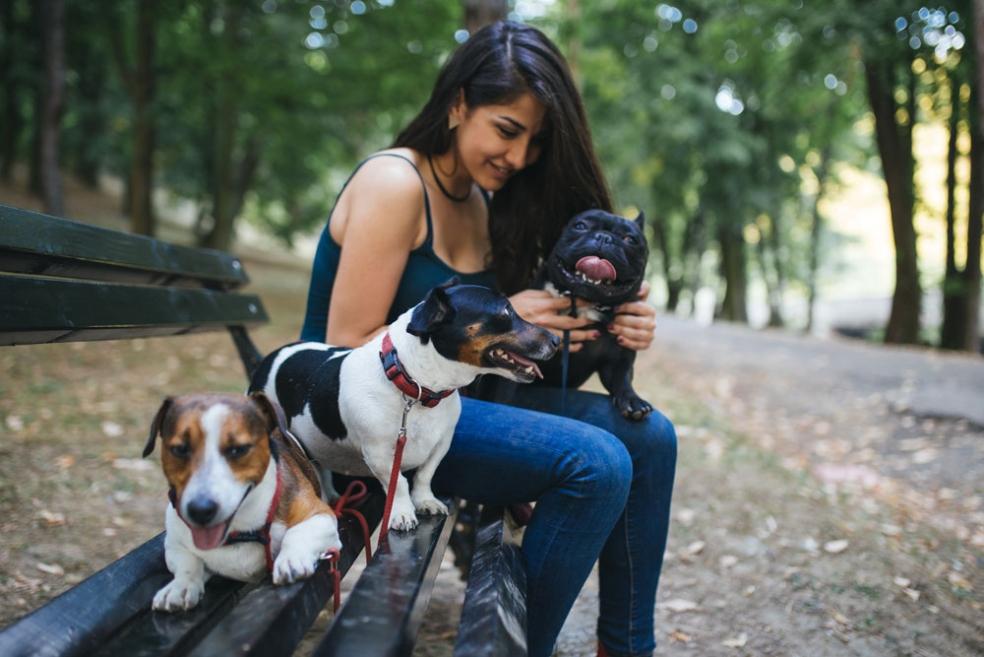 Evcil Hayvan Bakıcısı Olmak İçin Ne yapılabilir?